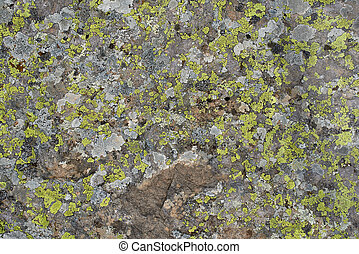 green lichen in the stone