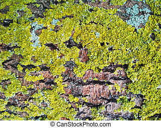 Green lichen on brown tree bark close-up.