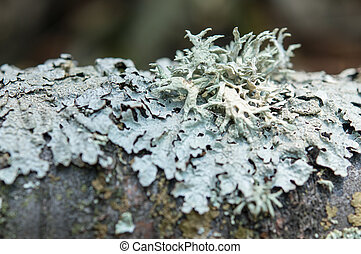 green lichen on tree bark