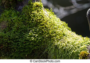 green lichen plant for background use at BC Canada