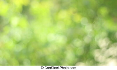 """Fresh green light bokeh, suitable as video backgrounds for nature, ecology themes. In photography, bokeh is the blur, or the aesthetic quality of the blur, in out-of-focus areas of an image. Bokeh has been defined as """"the way the lens renders out-of-focus points of light"""". However, differences in ..."""