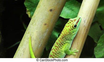 Green lizard animal on tree