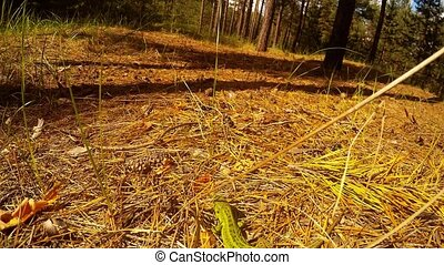 Green lizard in the forest. - Green lizard in the forest ....