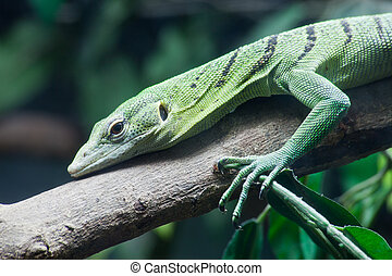 Green lizard on tree close up