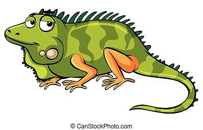 Green lizard on white background