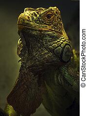 Green Lizard portrait on dark background. Close-up. Unrecognizable place. Selective focus