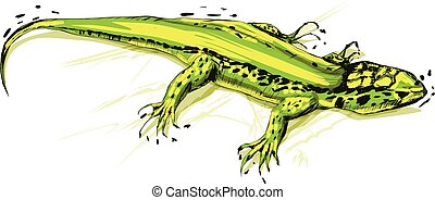 Green lizard, vector illustration on a white background.