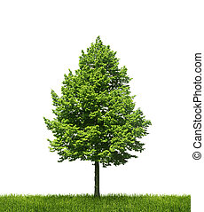 Green lone tree on white background - Tree growing on green ...