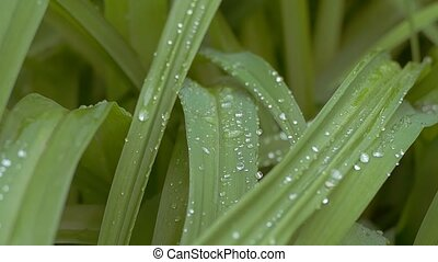 grass with water drops slow motion video