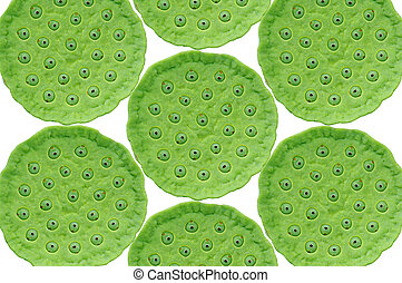 Green Lotus seed pods as background - Green Lotus seed pods...