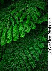 Green lush ferns growing in wild rain forest of Australia