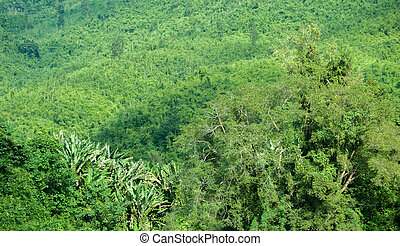 Green lush of tropical jungle forest in Laos