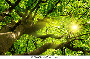 Green lush tree canopy with the sun