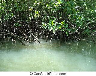 Green mangrove swamp