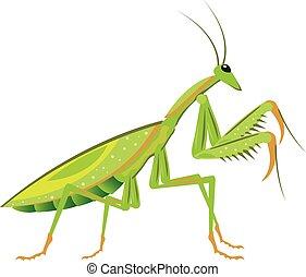 Green Mantis Vector bug critter ill