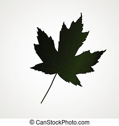 Green Maple leaf