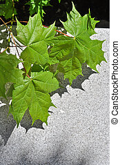green maple leaves on a concrete slab