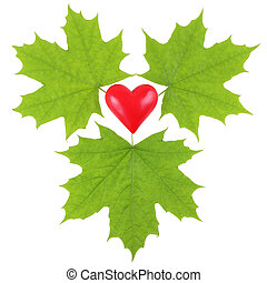 Green maple leaves surrounding a red plastic heart on a white ba