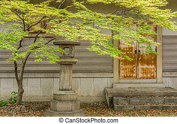 Green maple tree and leaves