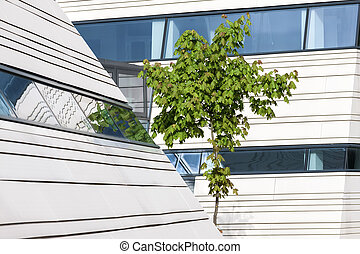 Green maple tree and modern architecture