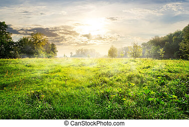 Green meadow at sunrise