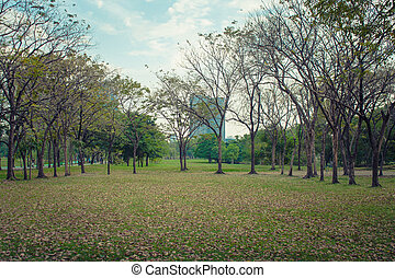 Green meadow grass surrounded with trees at public park in cloudy day.
