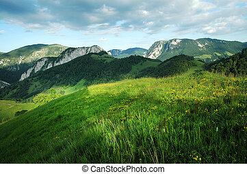 Green meadow, grassland in spring