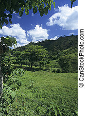 Green meadow in Dominican republic island countryside
