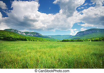 Green meadow in mountain.