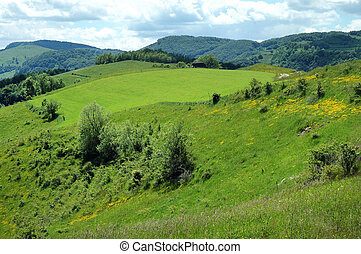 Green meadow in spring