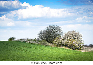 Green meadow in the spring