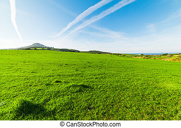 Green meadow on a clear day in Sardinia
