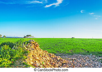green meadow under a clear sky