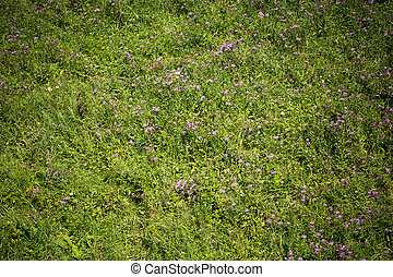 Green meadow with small flowers