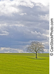 green meadow with tree and clouds