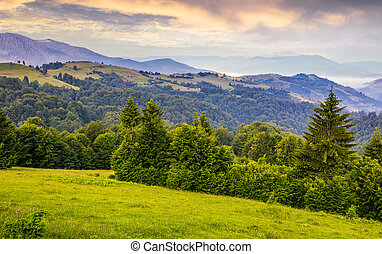 green meadows and forest of the Carpathians. beautiful...