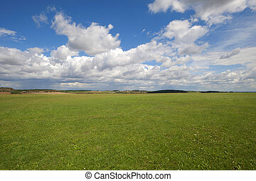 Green meadows with the blue sky and clouds