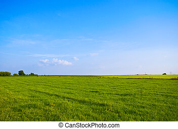green meaodow - bright green meadow with blue sky