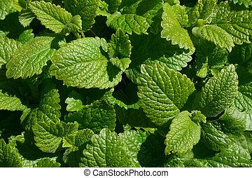 green melissa carpet - green carpet from melissa or lemon ...