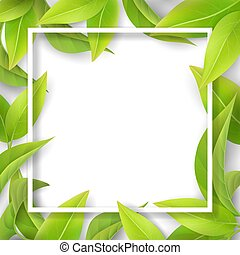 Green mellow leaves and white frame. Detailed leaf of a tea ...