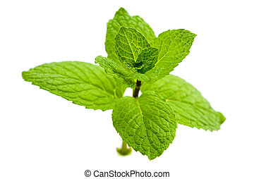 Green Mint - Close up green mint isolated on white ...