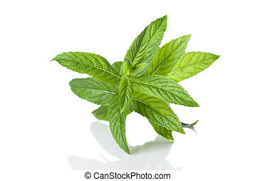 green mint isolated on white