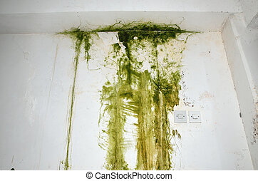 Green mold on a wall