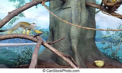 Green monkey runs on a rope in monkey houme - Green monkey...
