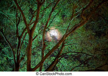 moon in night forest - green moon in night forest