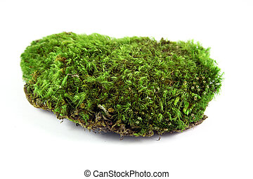A clump of green moss shot on a solid white background.