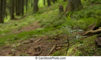 Moss and Fern Covered Forest Floor - Green Moss and Fern...