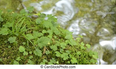 Green moss and leaves beside clear gentle brook in Kumamoto