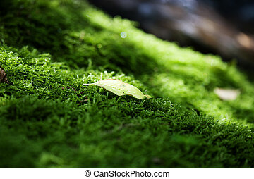 Green moss and leaves