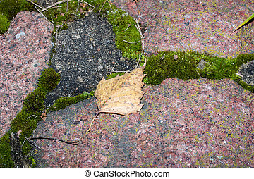 Green moss and yellow leaf on old stones closeup